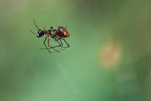 """Arañas """"partiéndose la cara"""" en el Jardín Canario"""
