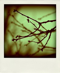 Poladroid Monday: Title and Registration. (Aubirdy) Tags: nature sepia dark polaroid outside droplets day gloomy sad bokeh dumb branches rainy hues raindrops monday sorrow upset deathcab titleandregistration poladroid aubirdy