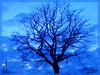 After rain (B. Razzouk) Tags: blue light sky tree art night germany landscape magdeburg singintheblues siloulette platinumheartaward brazzouk