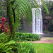 Rankin Millaa Millaa Falls Cairns - Australia Study Abroad Information