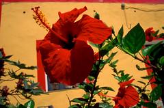 Linosa (Giovan Ombrello) Tags: linosa pelagie sicilia giovanniombrello isoleminorisicilia isole ar