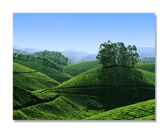 Munnar - A Dreamland (Pulok Pattanayak) Tags: blue india green garden tea kerala munnar aplusphoto