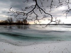 Transitions (deanspic) Tags: winter ontario canada tree ice water spring shore lonelytree stlawrenceriver transitions greenwater longsault g10 parksofthestlawrence panoramafotogrfico canong10