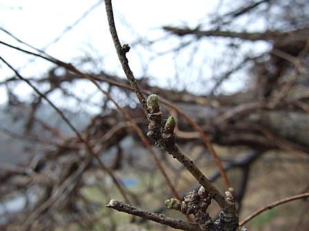 芽吹く木々~笹川流れ
