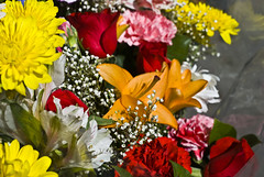 Bodega Flowers