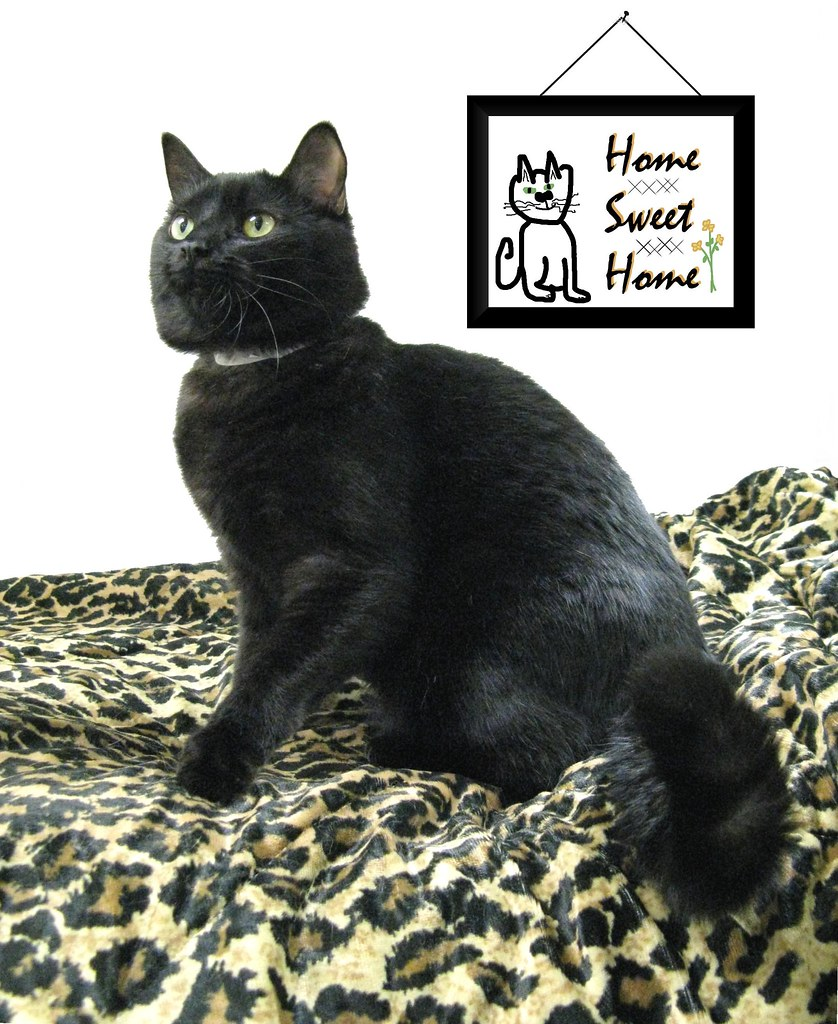 Piper Decorated Her Room at Heartland Humane Society - Now Let Her Decorate Your Home Forever!