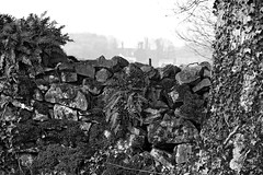 Cumbrian Textures - medium scale (dhewi) Tags: uk plant fern tree monochrome wall landscape ivy d3