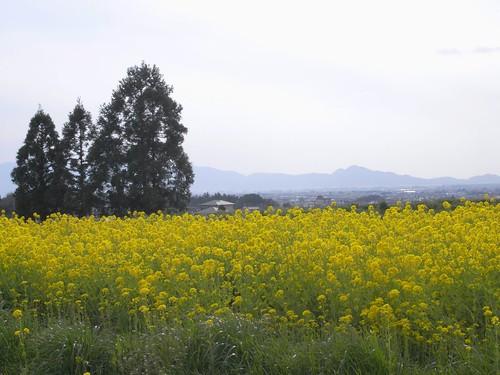 2009年-桜@山の辺の道-07