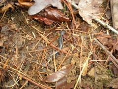 7 - Salamander