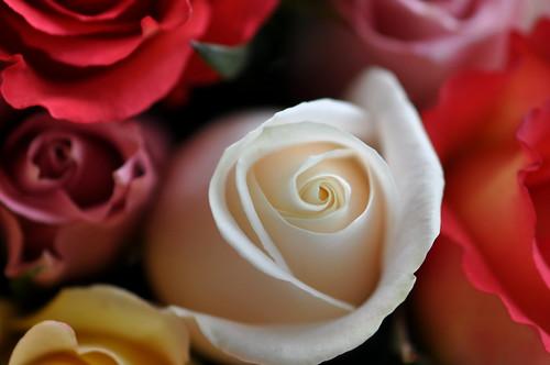 Ruffled Roses