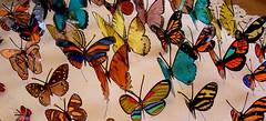 Bella, La Mariposa (LauraGiraldo) Tags: colores mariposas belleza artesana cantidad manualidad