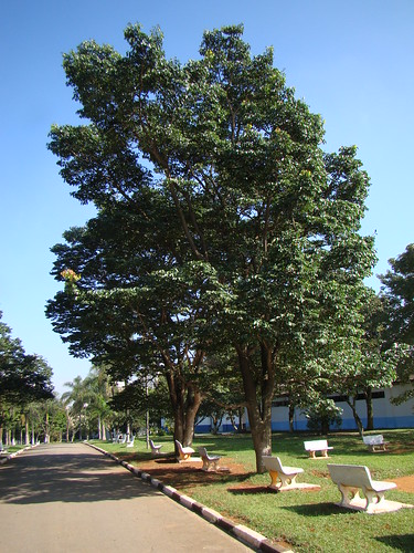 Jatoba - Brazilian Cherry (Hymenaea courbaril)