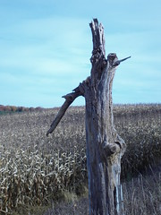 tree RIP 0101 (Orkakorak) Tags: our tree this is with please you decay tag picture your add stump invited a poola bej width48 height48 brilliant~eye~jewel hrefhttpwwwflickrcomgroupsbrillianteyejewelsimg srchttpfarm4staticflickrcom30582591716817a7356e51fctjpg orkakorak okpg
