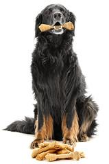 Dog (Timo Westergård) Tags: dog tim nikon bone d300 hovawart ludde profoto powmerantusenord timowestergard timowestergård