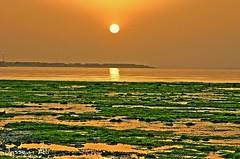 &  (Jasssem Ali) Tags: sea orange green ali kuwait  jassem  5photosaday    shwek