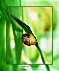 In freedom and immensity (* landscape photographer *) Tags: italy europe natura basilicata matera libert cammino aplusphoto immenso profumodiprimavera provvidenza salvyitaly francavillainsinni lucaniabella poatenza