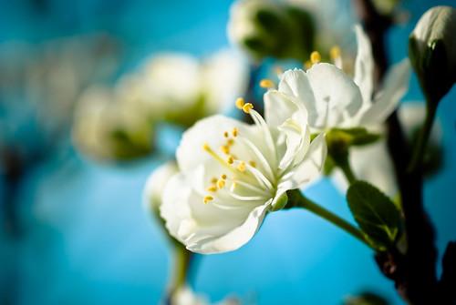 blossoms-21