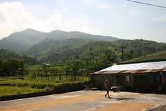 Ani (canlasa) Tags: road rice harvest grains drying palay