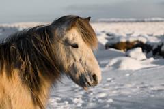 _____________ (p i e r o) Tags: photo nikon foto natura workshop neve viaggi paesaggi geysir oceano ghiaccio spedizione ghiacciao