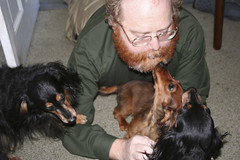 Day 39 - The Pack Celebrates the End of Tax Season (Ozdachs) Tags: sanfrancisco geoffrey dachshunds sequel