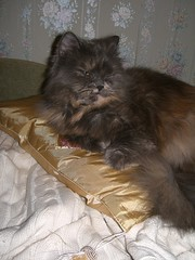 sleep on a golden pillow (dudlik) Tags: cat golden sleep pillow