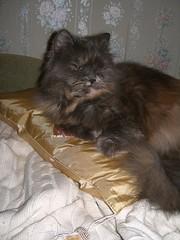 sleep on a golden pillow (dudlik) Tags: cat golden sleep pillow