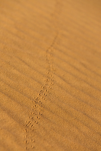 Beetle Tracks