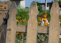 No Crows here (Thairms) Tags: old flowers fence garden scarecrow wodden