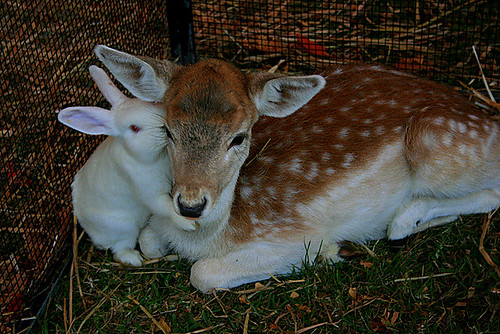 Deer & Bunny Love by X POSE.