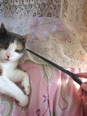 Crucio? (sarah hanfler) Tags: black cat death wand magic harry potter kitty ron sirius hogwarts lupin ginny curse hermione granger eater voldemort malfoy dumbledore weasley imperio avada kedavra bellatrix patronus stupefy cruciatus lestrange expecto patronum crucio protego