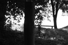 In the branches of the trees (Michel DA SILVA) Tags: blackandwhite bw blur france tree blancoynegro blanco nature monochrome branco canon season arbole rebel blackwhite europa europe branch natural noiretblanc burgundy negro natura preto bourgogne francia arbre pretoebranco flou xsi 89 floue blanconegro branche pretobranco saison naturel yonne joigny sooc 450d rebelxsi kissx2 canoneos450 micheldasilva villevallier httpwwwdasilvamichelcom dasilvamichel