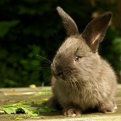 Little rabbit ;-) (Zuzka Grujbrov) Tags: pets animals square young rabbits platinumphoto theunforgettablepictures thesuperbmasterpiece vosplusbellesphotos
