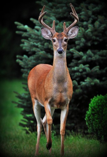 My Buck