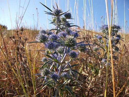 fiore agostino - backward