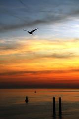 avondrood (- - Anne - -) Tags: zonsondergang horizon noordzee avond vlissingen kust avondrood avondfotografie kustlijn kustfotos