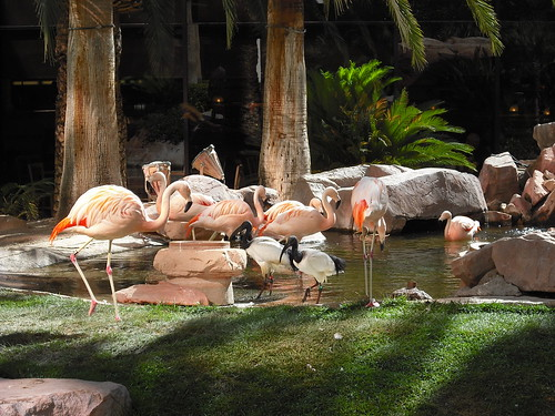 Flamingos and Ibis