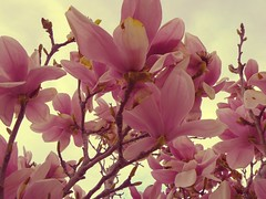 its alright, you'll find a brighter day cus love is on its way. (cheska annelliese.) Tags: flowers love its way is pretty blossoms