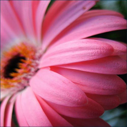 Pink color - Page 2 3328406371_ea6d962a82