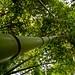 Dramatizaciones - El Bosque