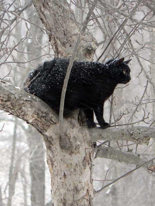 Snowy Cat