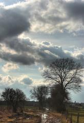 Sprimont, la voie romaine (Daniel Schoumakers) Tags: trees sky nature clouds landscape country ciel arbres nuages paysage campagne clture sprimont blueribbonwinner voieromaine impressedbeauty danielschoumakers vanagram
