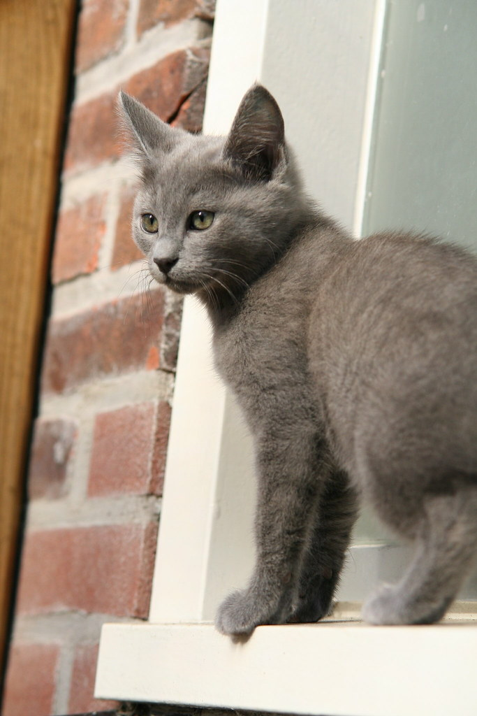 Kittens of Pegusha - Page 3 3340132207_7244085491_b