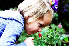 Discovery Rose (Beth n Rob) Tags: flower girl rose garden little smell bud discovery rosegarden fragrance