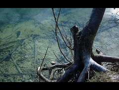 (Freund Leo) Tags: tree roots trunk soe reflektion shallowwater blueribbonwinner fotokonkurrencerdkuge192009