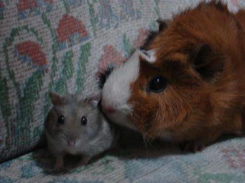 Quinzi & Brownie