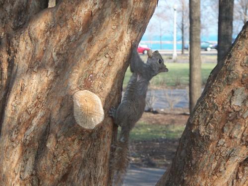 3.22.2009 Chicago Natura (9)