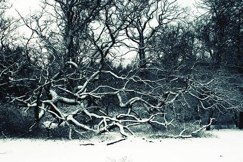Ytene in snow 2
