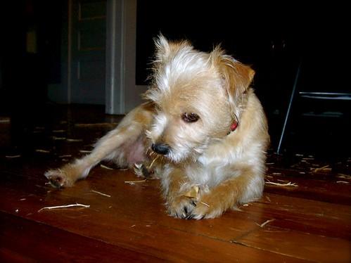 Prissy's chew toy