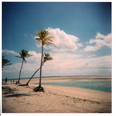 breeze (K!DDEE) Tags: ocean film beach water island holga lomo sand sunny 120film palmtrees bahamas breeze cococay