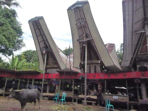 Pays Toraja Sud (14)